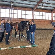 Úspěšnou novinkou v Allianz je koučink s koňmi pod vedením Simony Šaškové, který probíhá v rámci vzdělávacího programu pro talentované manažery Talent Pool.
