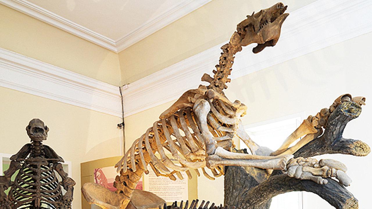 Šavlozubí tygři (smilodon) a obří lenochodi (eremotherium a glossotherium), cca 1,8 milionu let staré kosti.