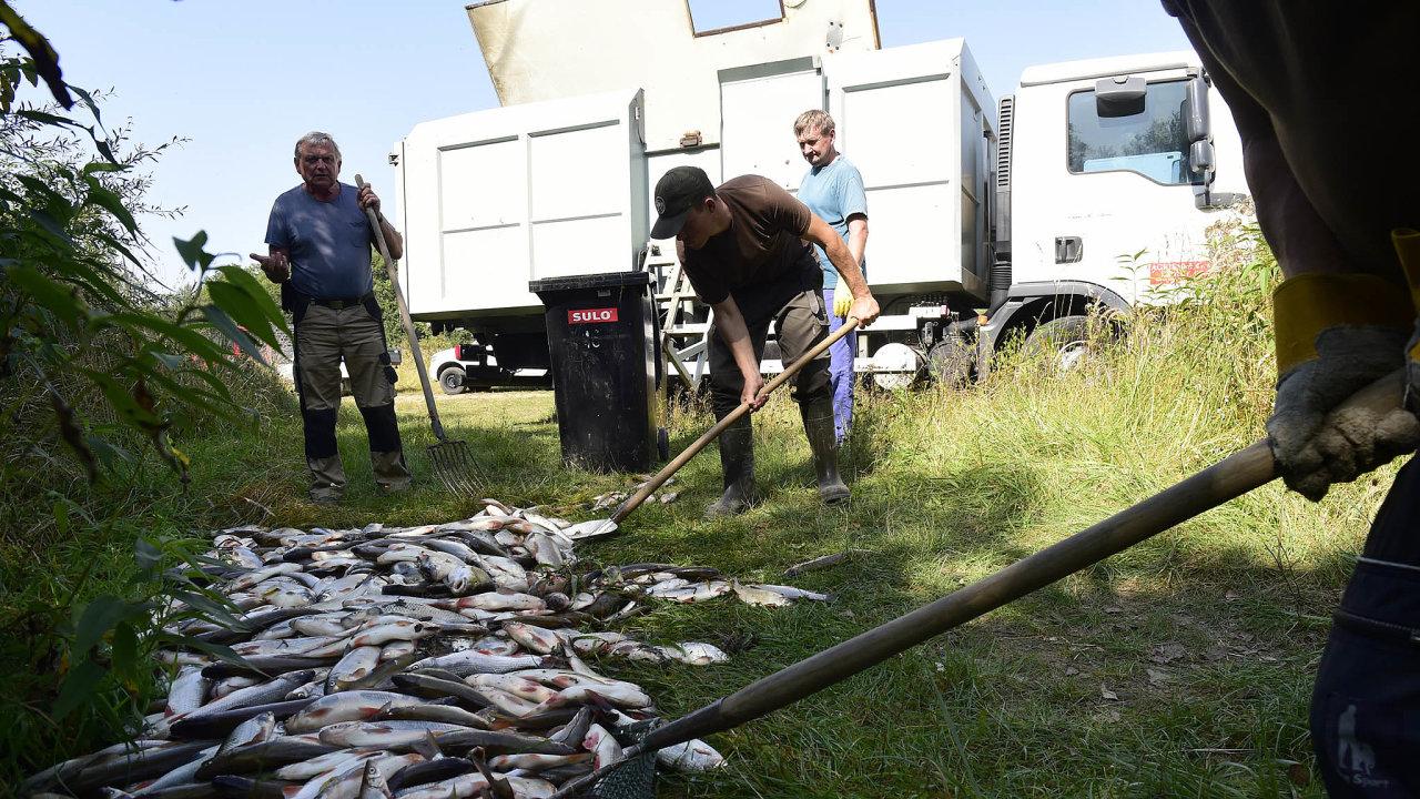 Jed všechno zahubil. Kyanidy uniklé vzáří doBečvy způsobily otravu všech ryb aživých organismů vúseku dlouhém zhruba 40 kilometrů.