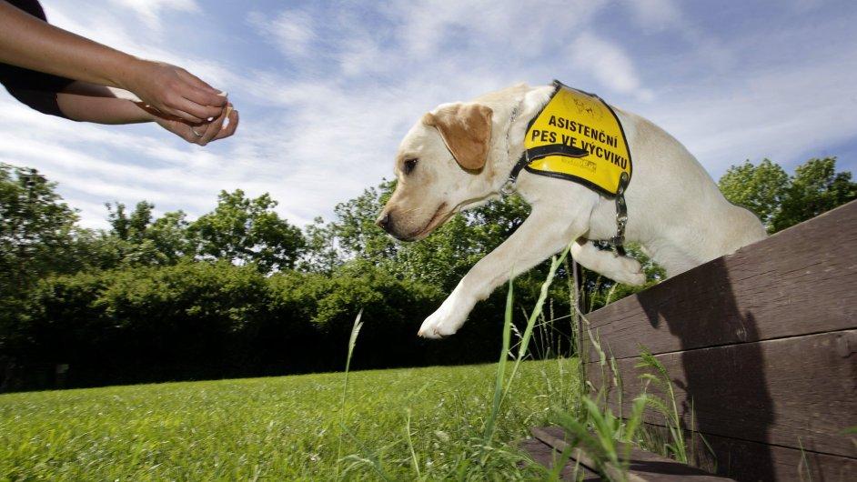 Jedním z držitelů značky spolehlivosti je i organizace Helppes, která cvičí psy pro postižené
