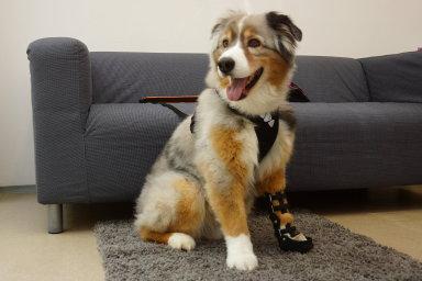 AnyoneGo vyrábí s pomocí technologie 3D tisku ortézy pro psy na míru