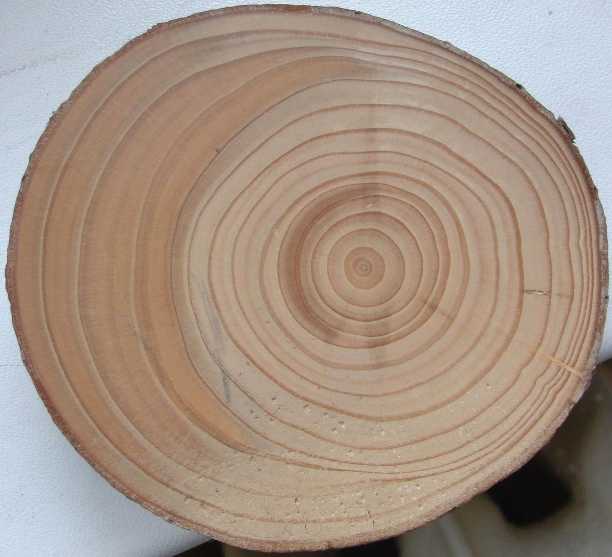 Už pár desítek centimetrů pohybu půdy může stačit ktomu, aby se kmen naklonil nebo aby se mu poškodily kořeny. Strom pak zúží tloušťku svých letokruhů.
