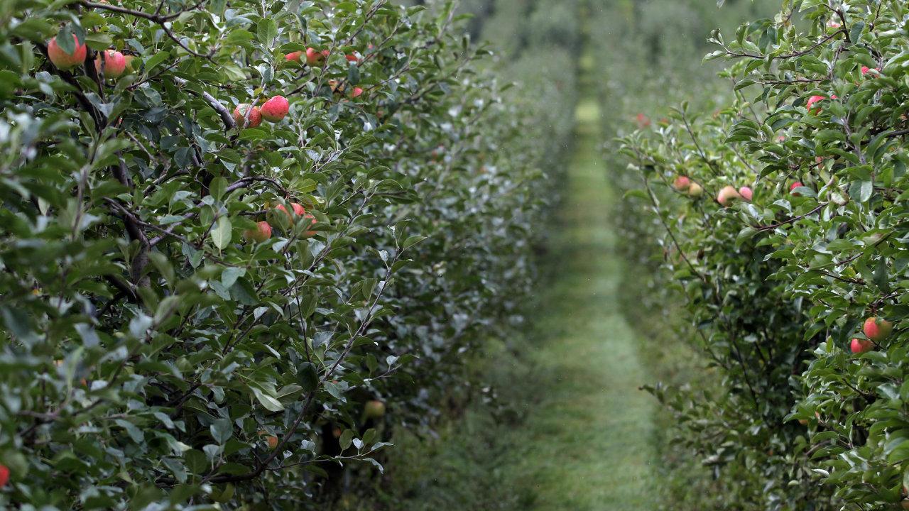 Cenu jablek sráží především jejich nadbytek na evropském trhu.