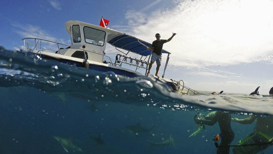 Potápění se žraloky na Havaji