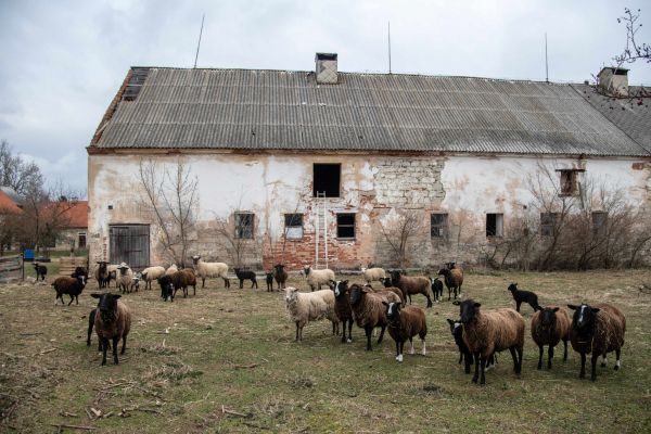 Petr Musil - majitel ekologické farmy.