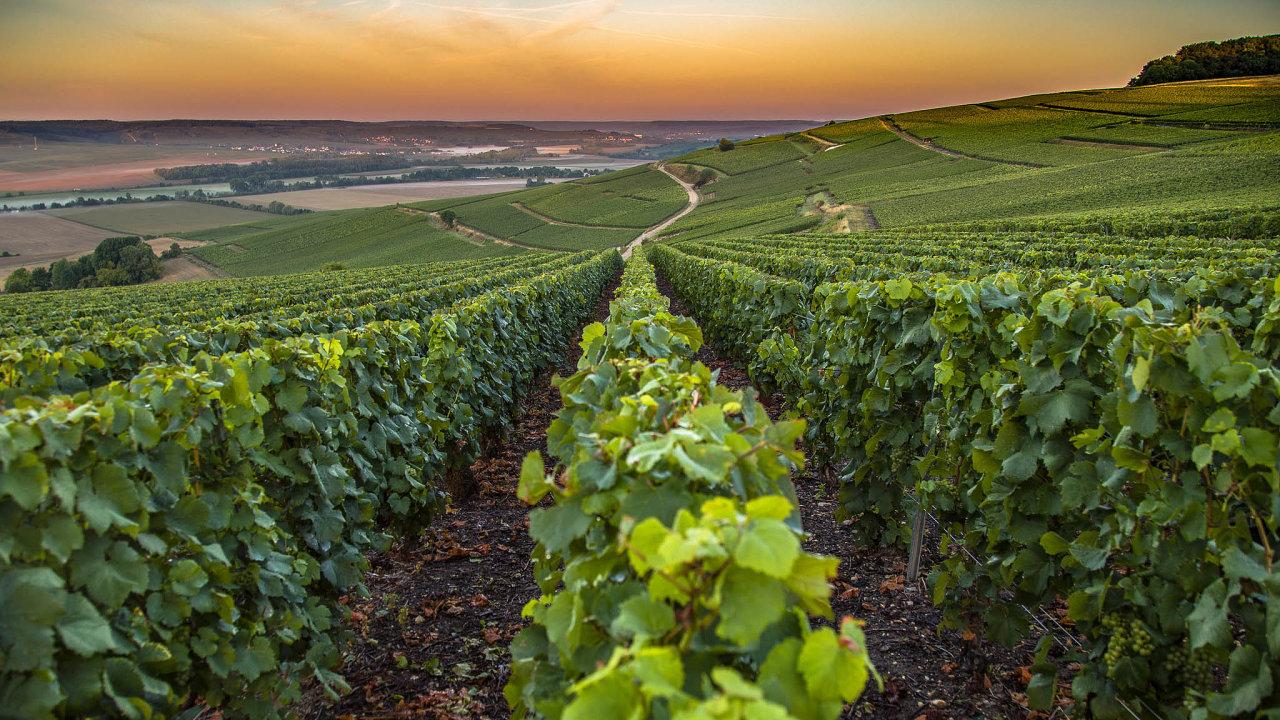 Prodej šampaňského se výrazně propadl. To vedlo kesporu mezi majiteli vinic avelkými výrobci šampaňského, jako jsou třeba Bollinger, Moët & Chandon či Dom Pérignon.