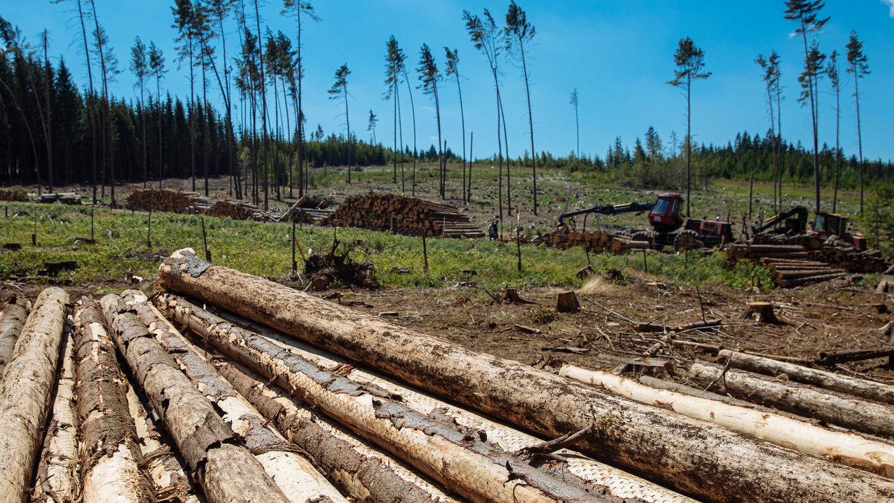 Lesy ČR se potýkají už několik let srozsáhlou kůrovcovou kalamitou apádem cen dřeva.