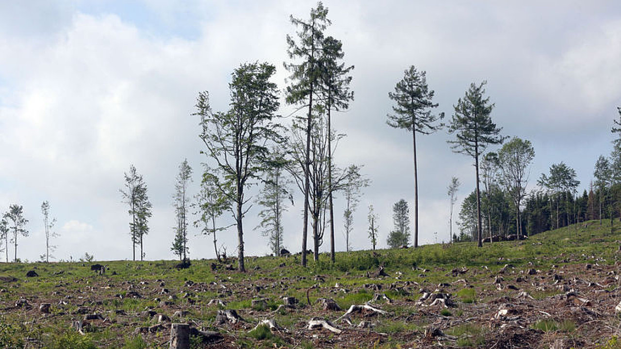 Lesy hynou na obrovských plochách, stát sabotuje návrhy vědců, říká v duelu s lesníkem ekolog Bláha