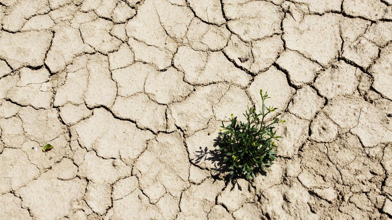 Vláda schválila peníze naboj proti suchu.