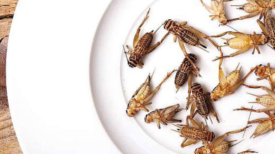 Kanadský podnikatel věří v potenciál hmyzu v kuchyni. - Ilustrační foto.