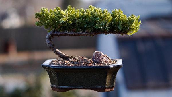 Levitující bonsai zdánlivě překračuje zákon gravitace.