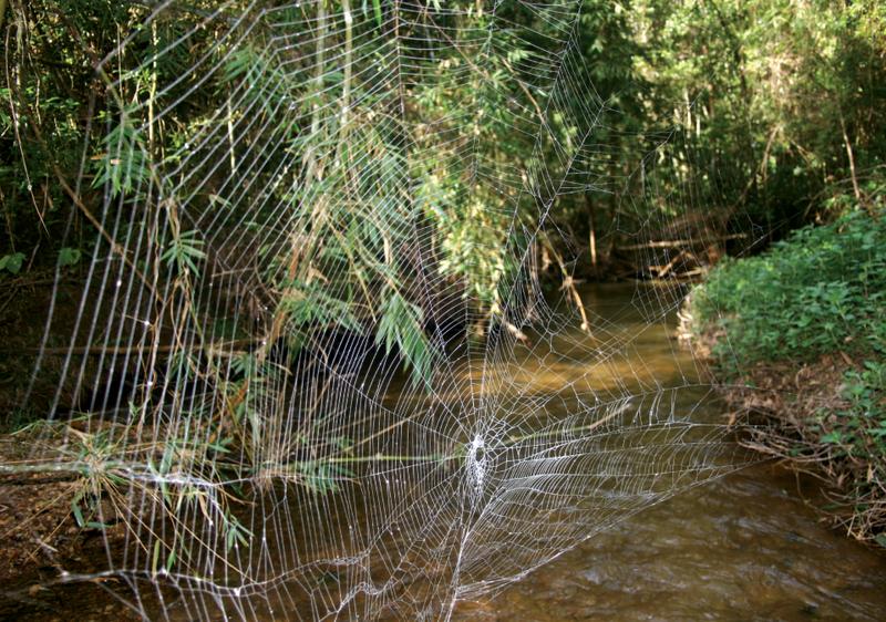 největší pavučina