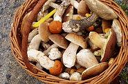 Chladn� a mlhav� r�na jsou pro houby ide�ln�, proto je podzim vrcholem houba�sk� sezony.