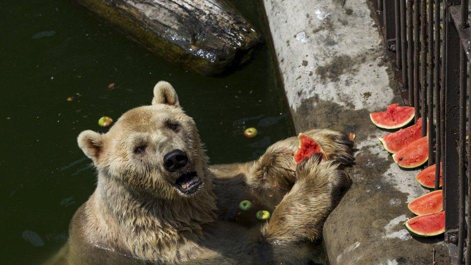 Medvědy Ludvíka a Dášenku mají na zámku v Náchodě - Ilustrační foto.