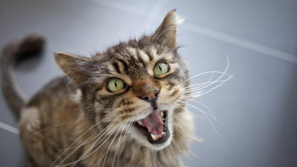 Kočky jsou podle nejnovějších průzkumů mnohem vnímavější, než by se mohlo zdát - Ilustrační foto.