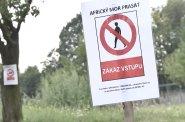 Africký mor prasat se dál šíří Evropou, nákaza může znovu propuknout i v Česku, varuje Jurečka