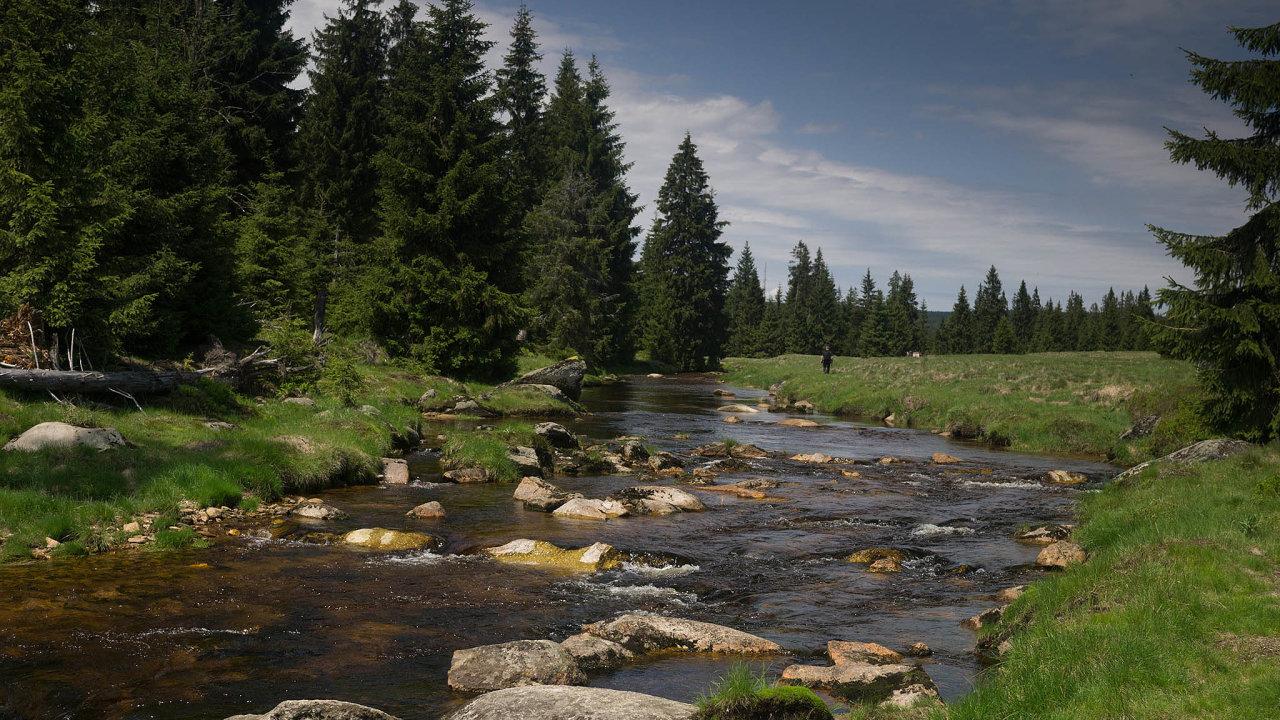 Ohrožená krajina. Jak dostatek vody, tak zdravé lesy musí stát zajistit i s pomocí miliardových výdajů.