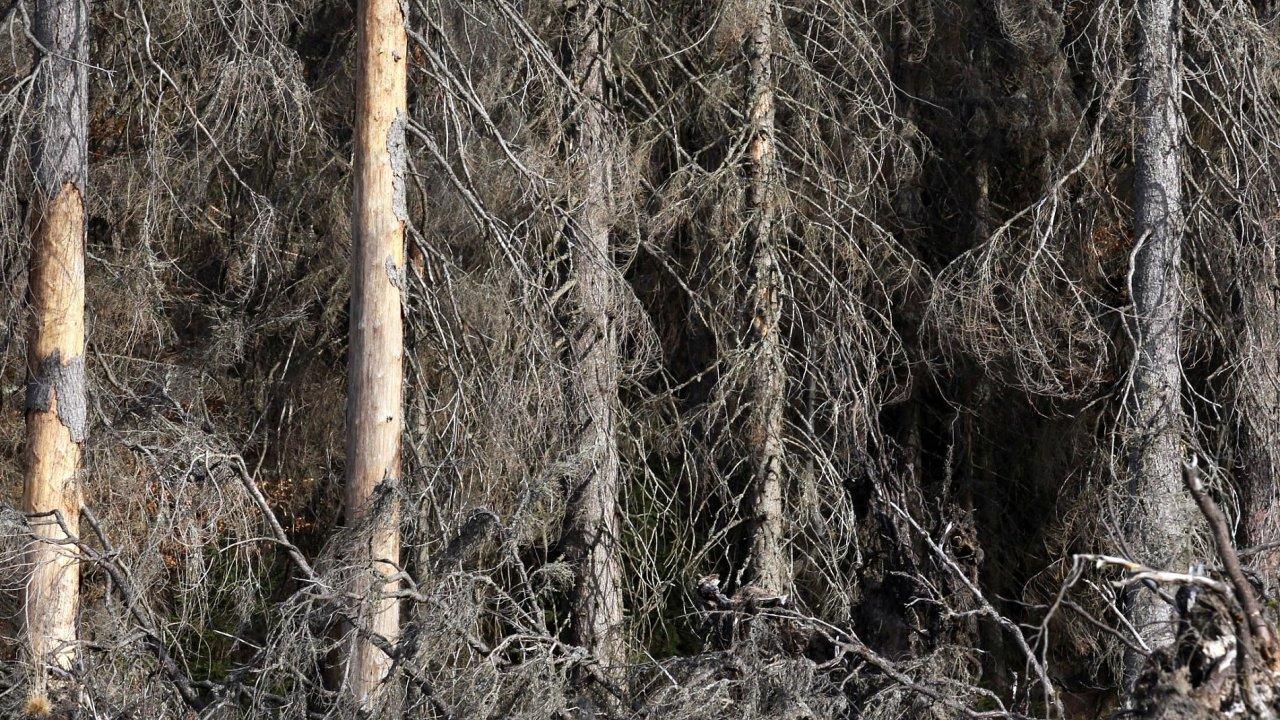 Rozsah kůrovcové kalamity se v posledních letech znásobil.