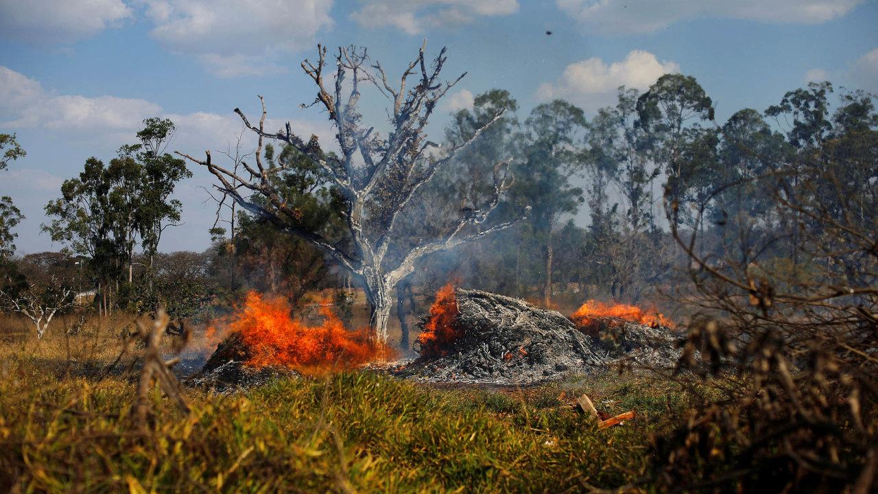 Národní ústav pro výzkum vesmíru zveřejnil data, podle nichž od začátku roku eviduje vBrazílii rekordních 72 843 lesních požárů.