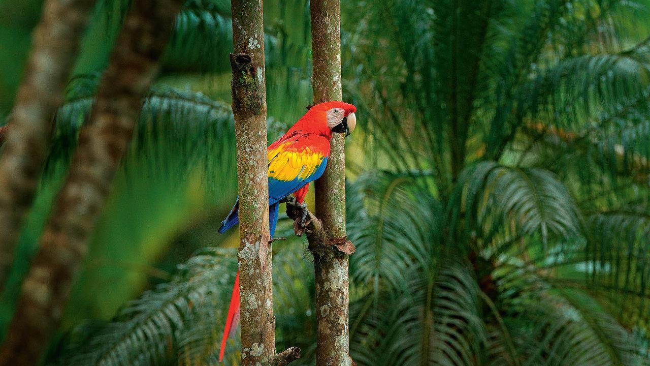 Papoušek může být přítelem nacelý život (ilustrační foto).