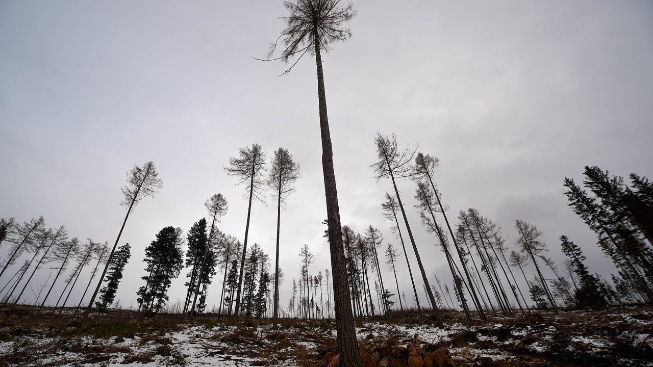 Chřadnoucí stromy: Českým lesům škodí sucho, vysoké teploty a napadení kůrovcem. Oslabené stromy nejsou schopné čelit škůdcům.