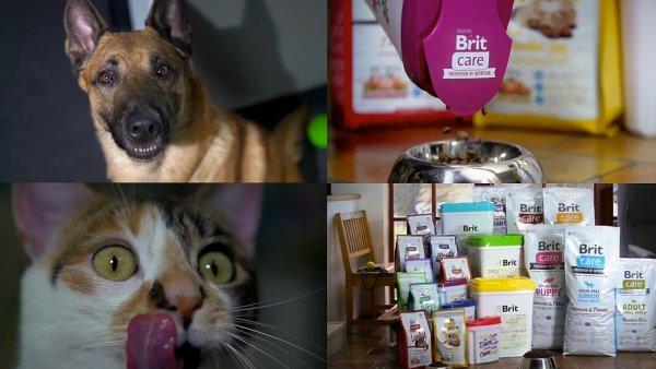 Nov� kampa� promuje prodejn� akci na krmivo pro psy Brit Care