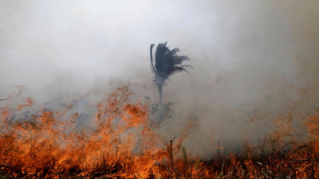 Cenný amazonský prales letos ohrožuje rekordní počet požárů.