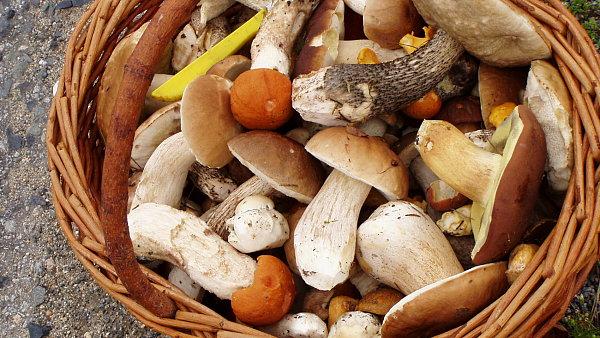 Chladná a mlhavá rána jsou pro houby ideální, proto je podzim vrcholem houbařské sezony.