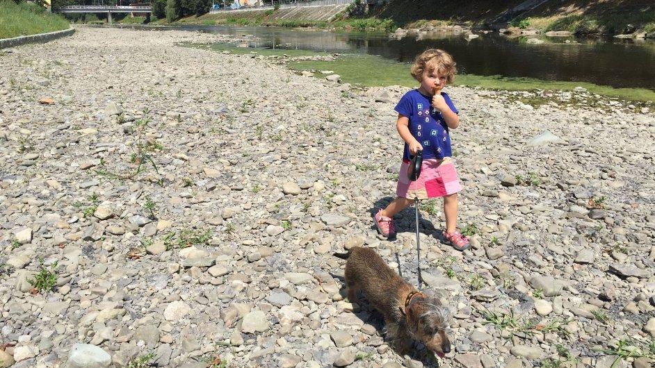 V Česku je takové sucho, až vysychají koryta řek. Na snímku koryto řeky Olše v Českém Těšíně.