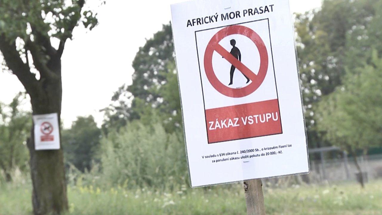 Armádní veterináři dnes pitvali první prasata ze Zlínska - Ilustrační foto.