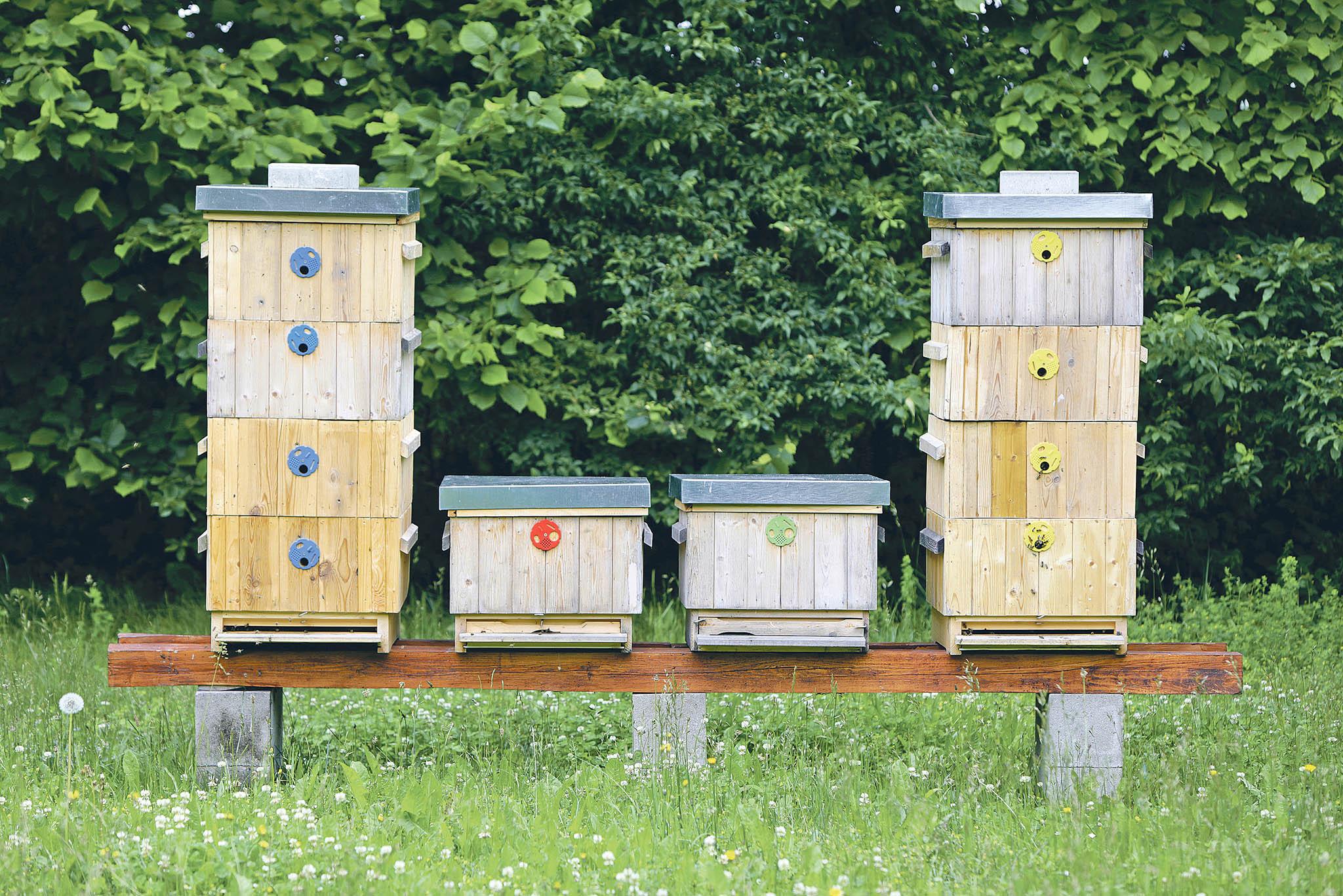 V zámeckém parku, který je součástí temelínského infocentra, se od roku 2018 chovají včely.