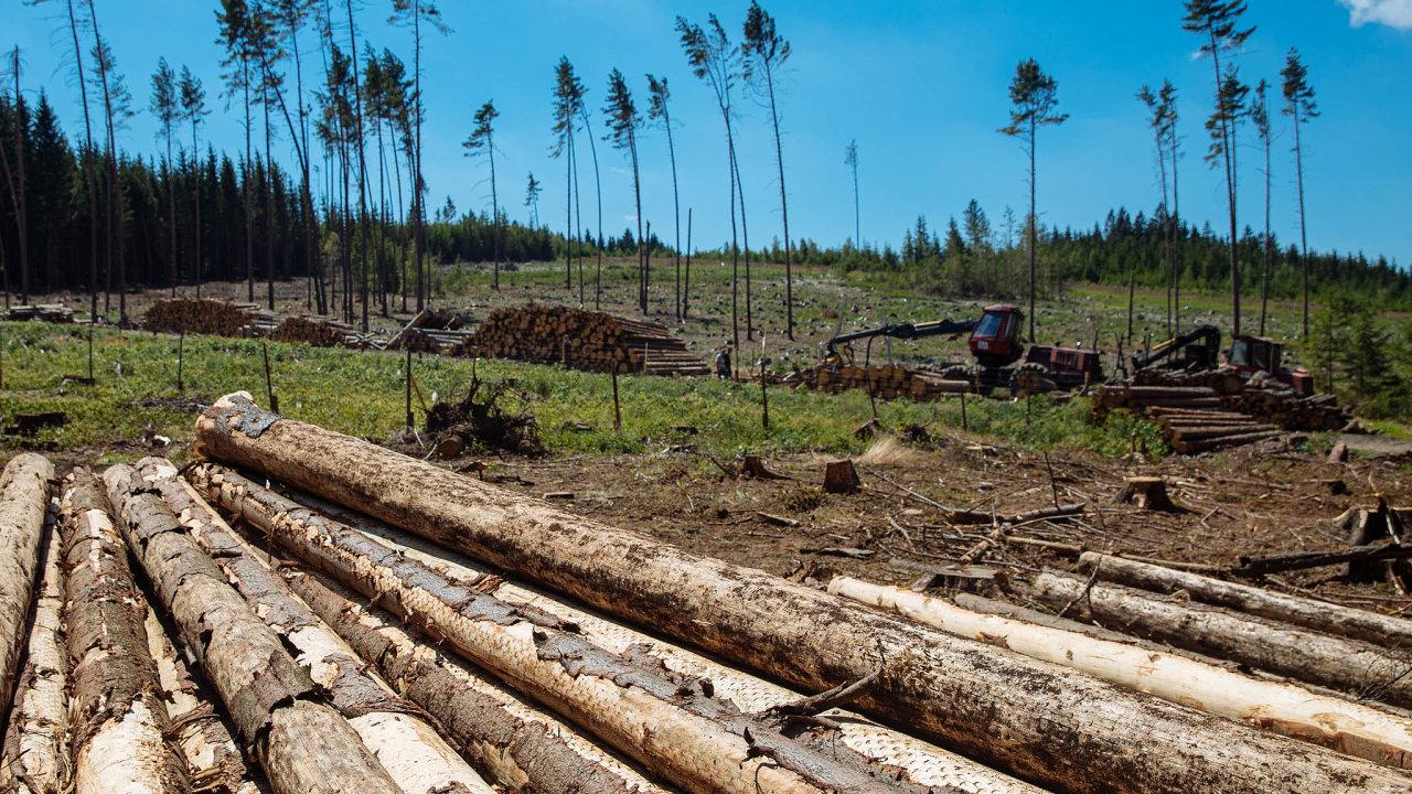Summit naBabišův popud vyzval Evropskou komisi, aby zohlednila problém skůrovcem. Kvůli kůrovcové kalamitě české lesy přestaly pohlcovat emise CO<sub>2</sub>, což jinak lesy dělají.