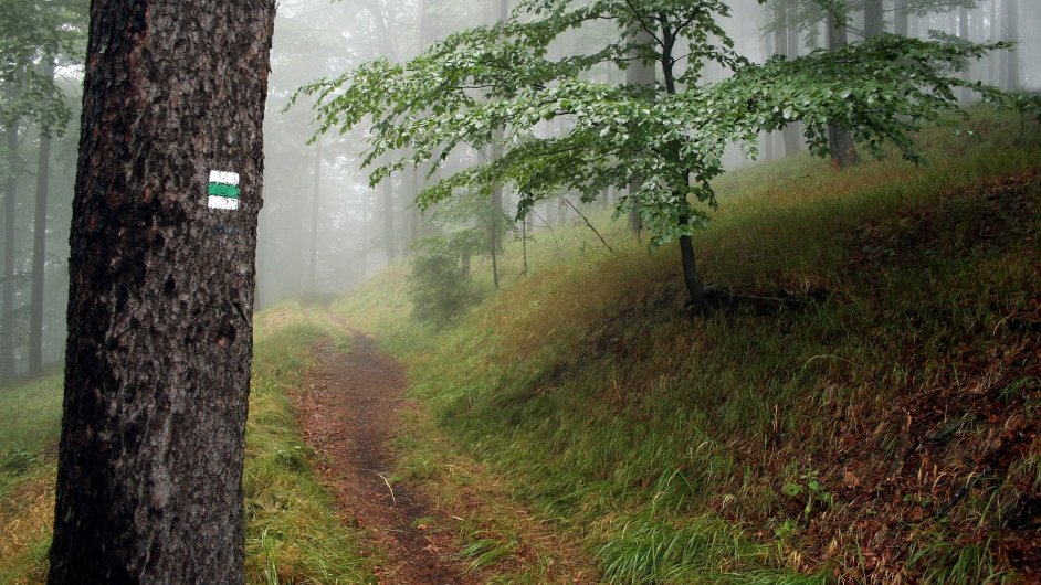 V západní Evropě plně doceňují ekologickou a rekreační poptávku ve své lesnické politice, u nás podpora pilotních projektů, jež by se touto problematikou zabývaly, chybí.