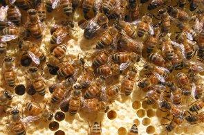 České děti neznají med. Některé školy a školky proto zavedou