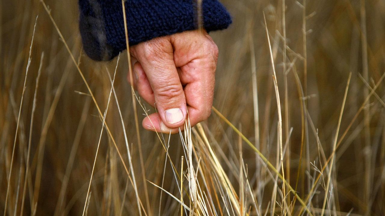 Sucho ničí světovou úrodu