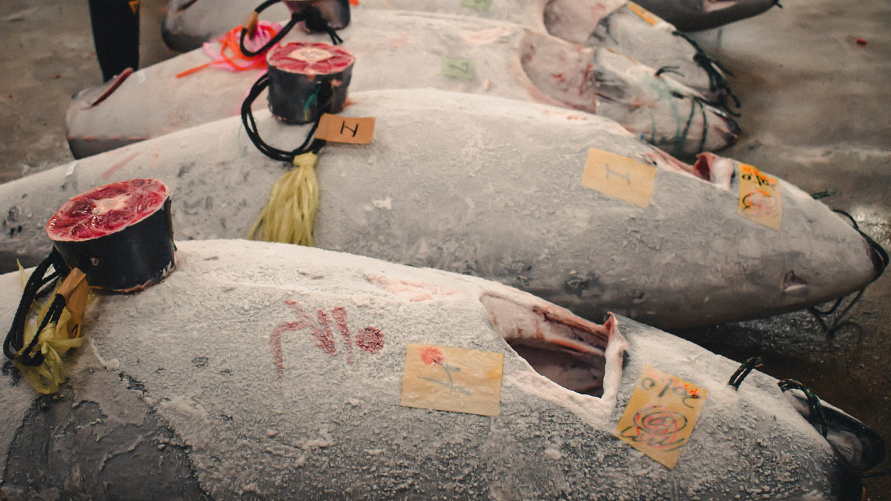 Rozhodující částí těla připosuzování jakosti masa tuňáka je právě jeho ocas. Snímek je zrybí aukce vTokiu.