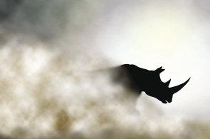 Dimension Data a Cisco pomáhají ochraně nosorožců v Jižní Africe, ilustrace