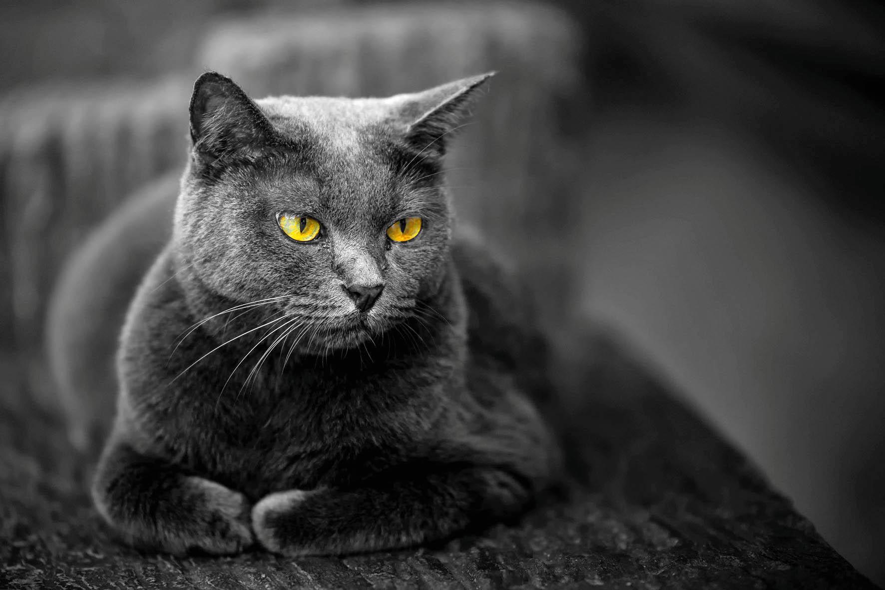 Ačkoli kočky mají jinou povahu než psi, najdou se mezi nimi takové, které svého člověka po příchodu domů naprosto srozumitelně vítají.
