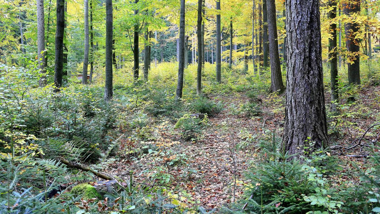 Příklad lesu budoucnosti