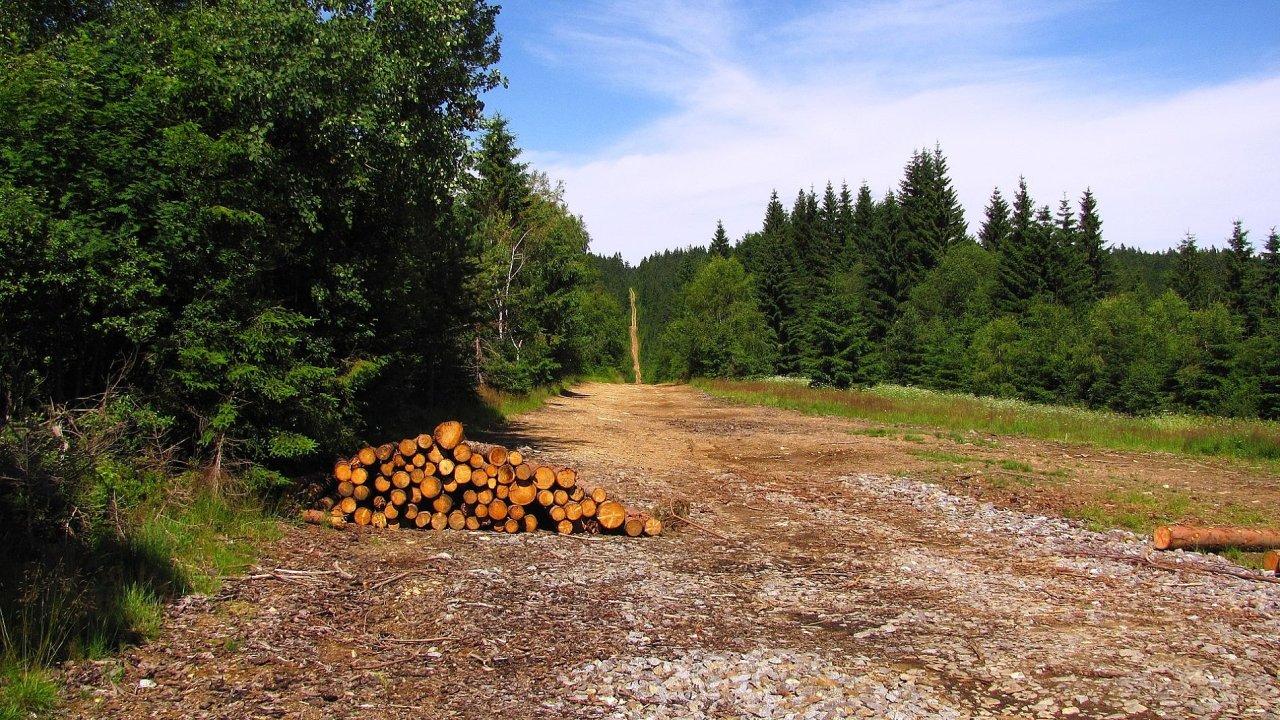 Šumava, těžba dřeva