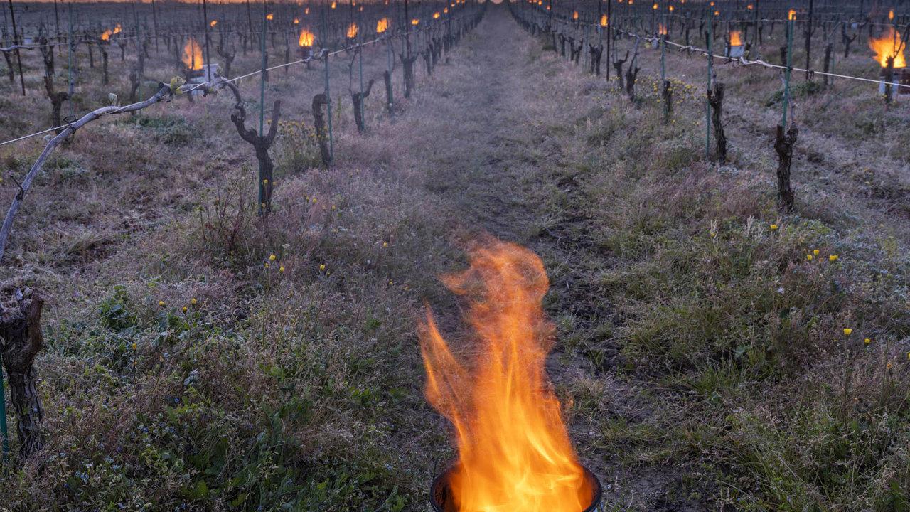 Francouzské vinice poničil mráz. První odhady mluví oškodách až zadvě miliardy eur.