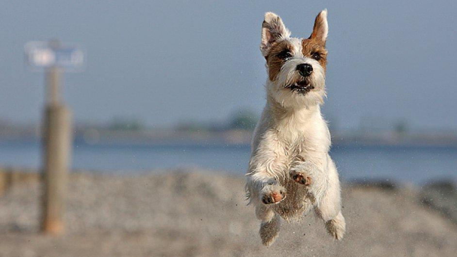 V Chorvatsku jsou psí pláže na poloostrově Istrii, v Kvarnerské riviéře či Dalmácii.