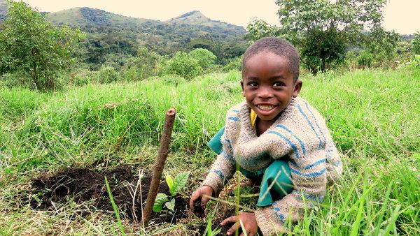 Africk� d�t� p�i v�sadb� strom� v Kamerunu