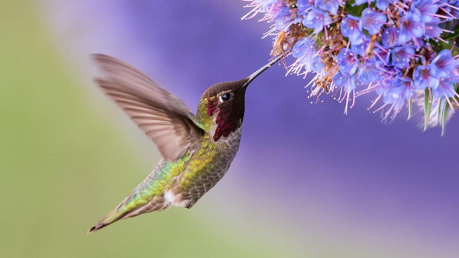 EU zvažuje zmírnit ochranu ptáků. (Ilustrační foto)