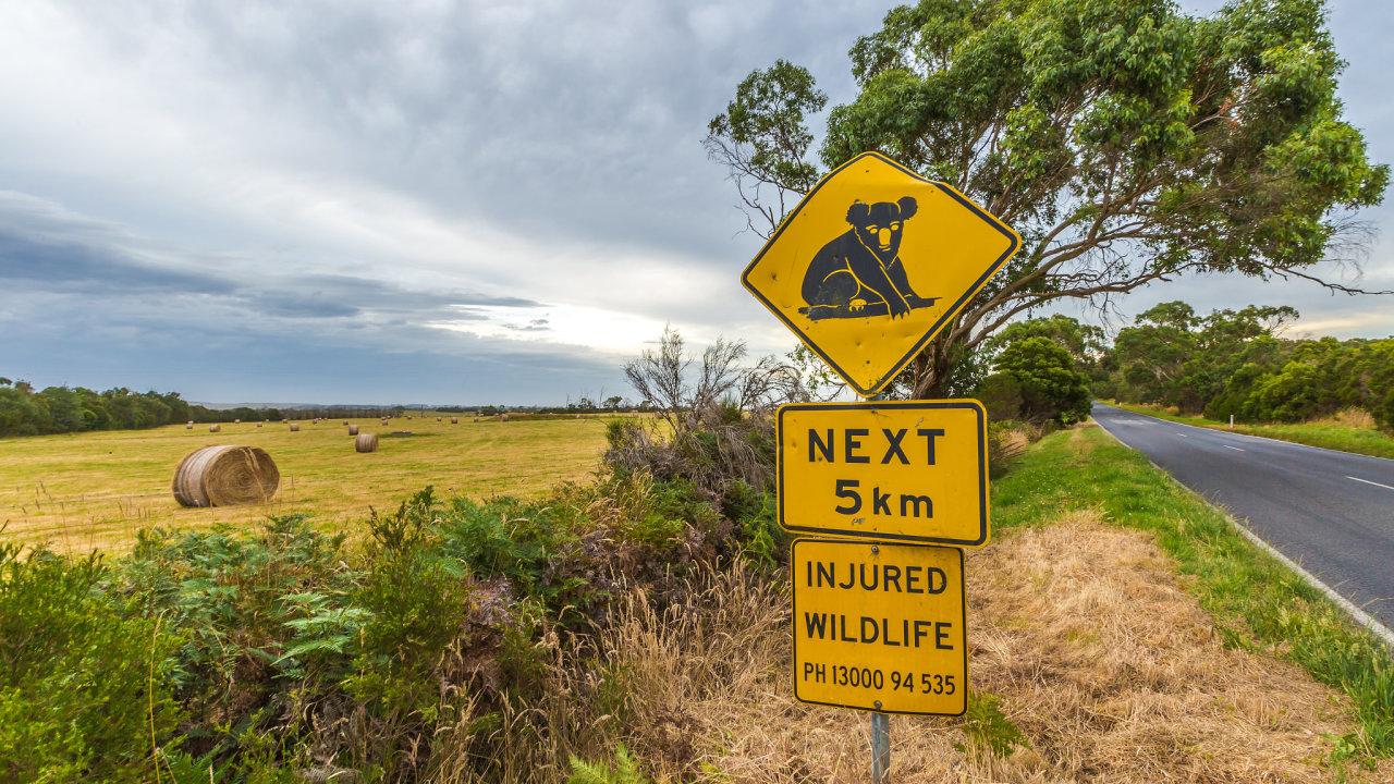 Austrálie, Koala