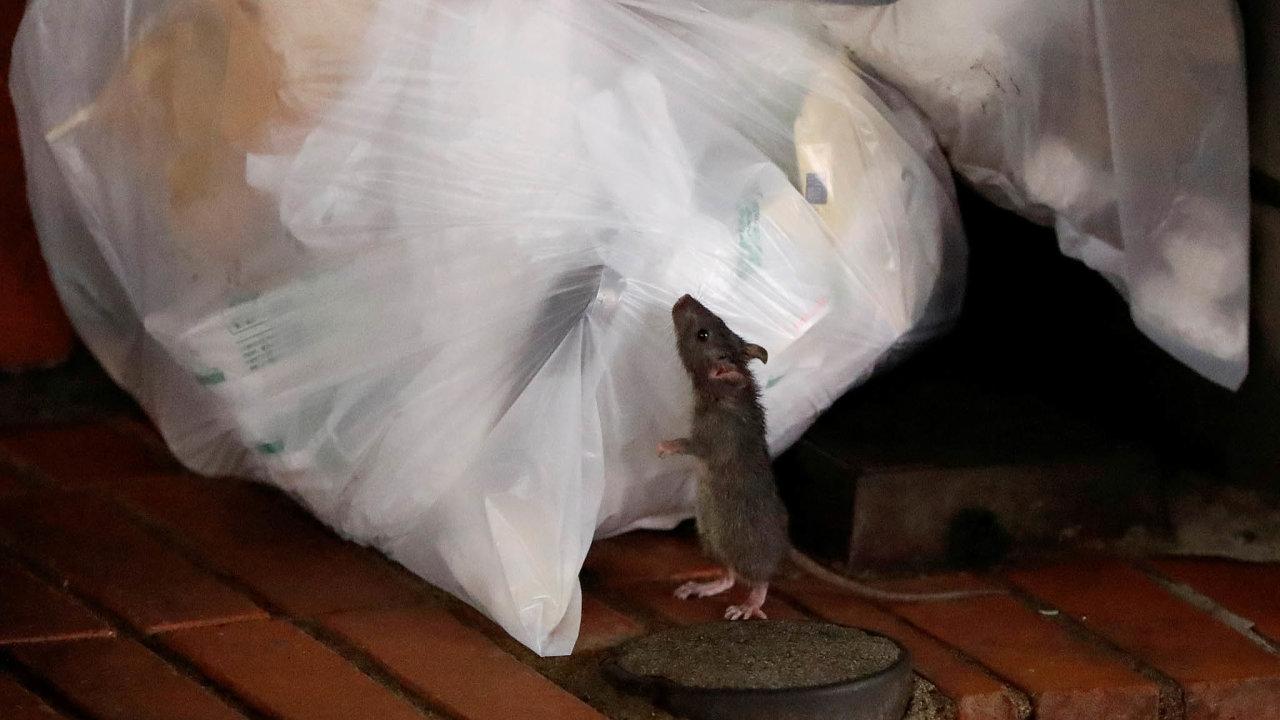 VNew Yorku krysí koloniejiž pogenerace spoléhají nazásoby vyhozeného jídla, jež seobjevují vpopelnicích urestaurací. Nyní kvůli restrikcím spojeným skoronavirem tento zdroj potravy vyschl.