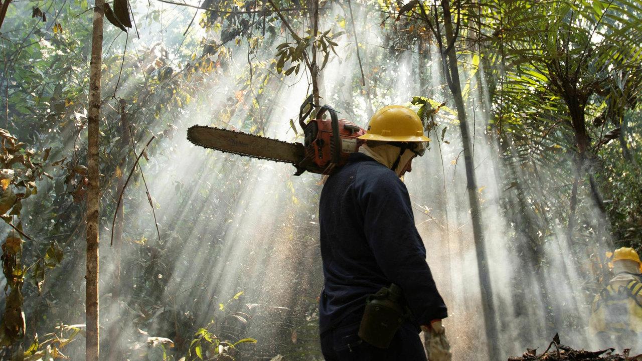 Tempo kácení největšího pralesa nasvětě zrychluje. Loni se zmenšil o17 tisíc kilometrů čtverečních.