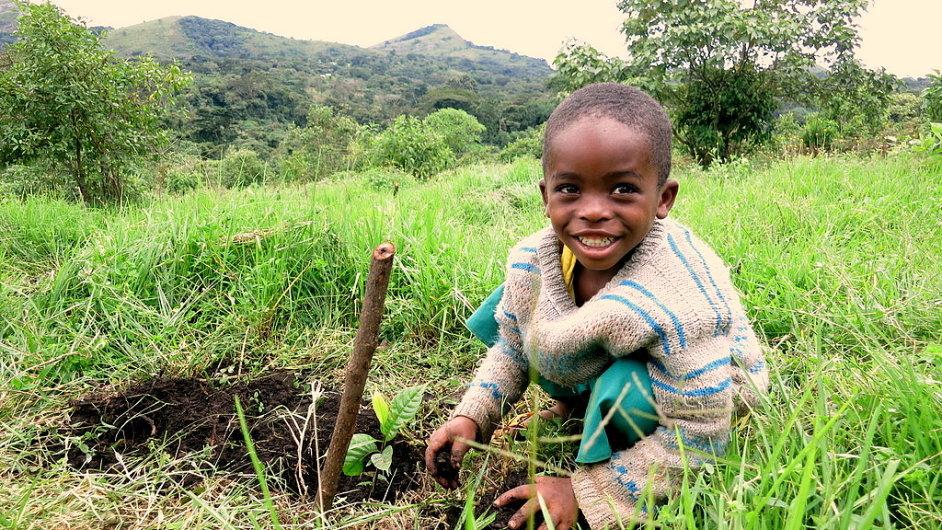 Africké dítě při výsadbě stromů v Kamerunu