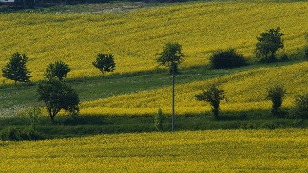 Brusel dal zemědělcům návod, jak se státy mohou snažit bránit skupování půdy investory.