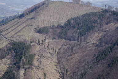 Mizící monokultury. České lesy potřebují moderní péči. Mimo jiné musí zmizet smrkové monokultury, napadané často kůrovcem.